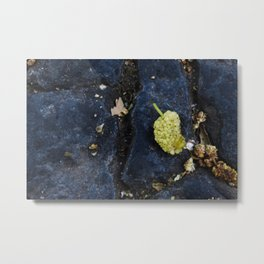 Ripe fruit of mulberry Metal Print