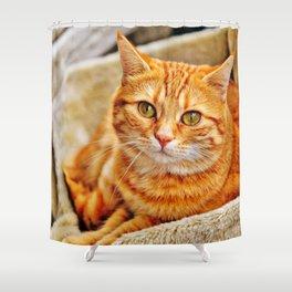 Cute red cat Shower Curtain
