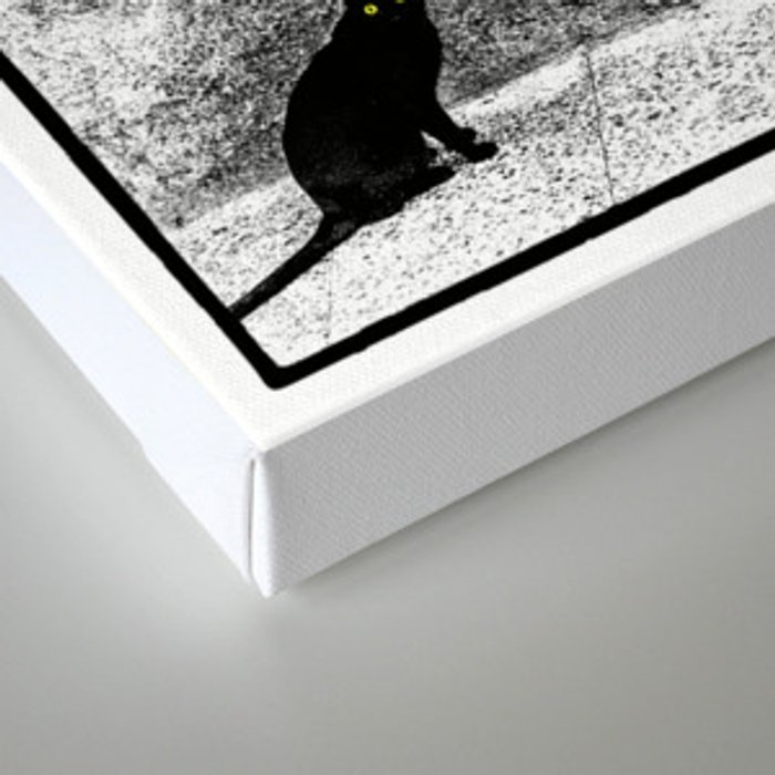 The Cat (2) Canvas Print