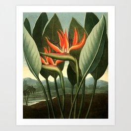 Birds of Paradise : Temple of Flora Art Print