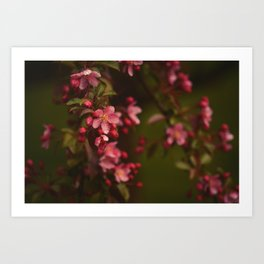 Graceful Spring Art Print