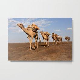 Camel Caravan Metal Print
