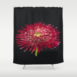 Red Gerbera large Shower Curtain