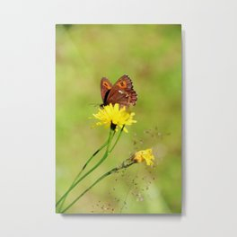 Arran Brown butterfly and yellow flower Metal Print