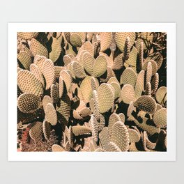 Cactus Maximalism // Vintage Bohemian Desert Photography Home Decor Summer Vibes Art Print
