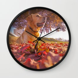 Labrador in park Wall Clock