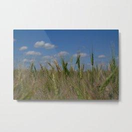 Grains Metal Print