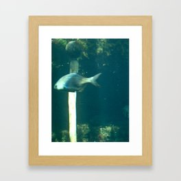 fish in water 2 Framed Art Print
