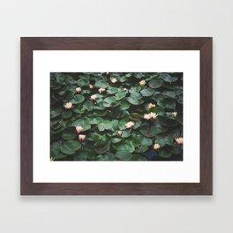 Echo Park Waterlillies Framed Art Print