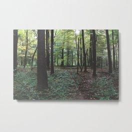Pfeiffer Arboretum IX Metal Print