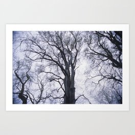 Look up at the Trees Art Print