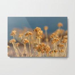 Helichrysum Italicum Immortal Flowers Metal Print