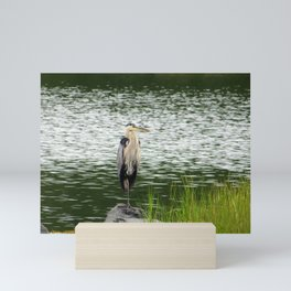 Great Blue Heron - Standing Stately Mini Art Print