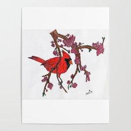 Cardinal on Redbud Branch Poster