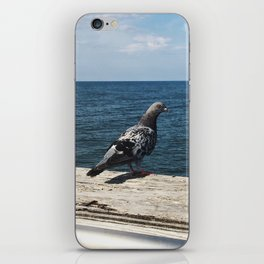 Pigeon on the Water iPhone Skin