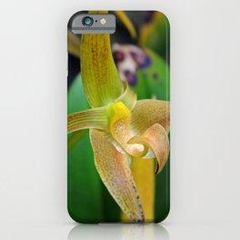 Golden Epidendrum iPhone Case