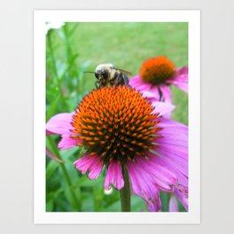 Bee on a Pink Flower Art Print