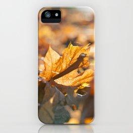 Yellow foliage, autumn iPhone Case