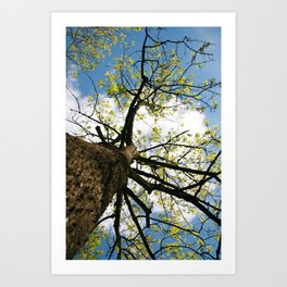 Tree Blossoming in the Blue Sky Art Print