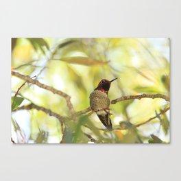 Sweet Hummingbird - Photography Canvas Print
