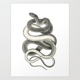 snake vintage style print serpent black and white 1800's Art Print