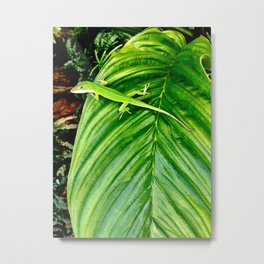 Anole on a tropical leaf Metal Print