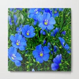 Dainty Blue Flax Linum Flowers Metal Print
