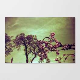 Redscale Blossom Canvas Print