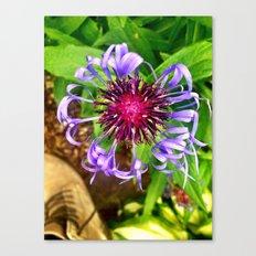 Funky Flower Canvas Print