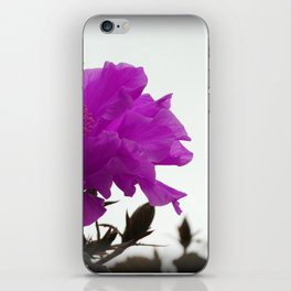 violet hibiscus iPhone Skin