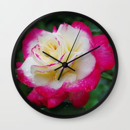 Double Delight Rose - Red and cream beauty Wall Clock