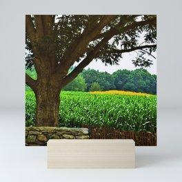 Sunflowers amid fields of corn in Scituate, Rhode Island by Jéanpaul Ferro Mini Art Print