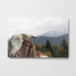 Look who's complaining, funny goat photo Metal Print