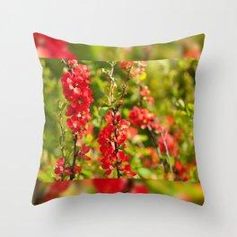 Chaenomeles shrub red flowering Throw Pillow