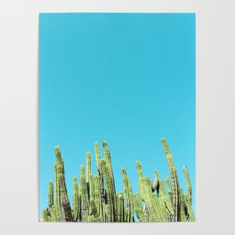 Desert Cactus Reaching for the Blue Sky Poster