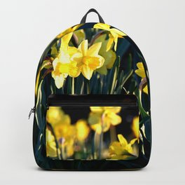LOVELY DAFFODILS IN THE LATE SPRING AFTERNOON LIGHT Backpack