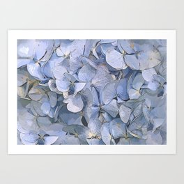 Blue Hydrangeas Art Print