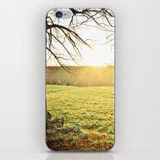 Golden Glory iPhone & iPod Skin