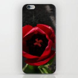 Tantalizing Tulip iPhone Skin
