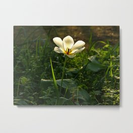 Evening walk in spring (tulip) Metal Print