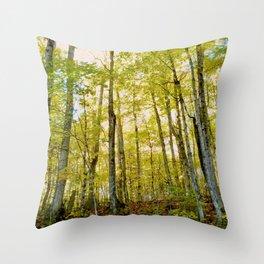 Birches in Autumn Light Throw Pillow