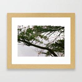 Foggy Pine on Beauty Mountain  Framed Art Print