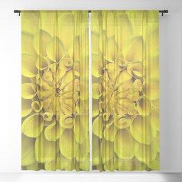 Yellow Dahlia On Black Sheer Curtain