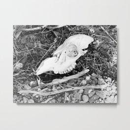 The skull on the Loch Metal Print