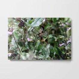 Purple Chlorophyll Metal Print