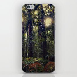 Sunrays in the Redwoods iPhone Skin
