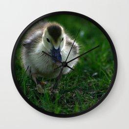 Cute Duckling Walking on a Lawn Wall Clock
