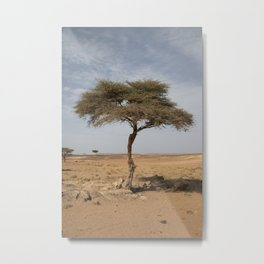 Lonely tree – Travel Photography Morocco Metal Print