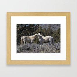 Wild Horses with Playful Spirits No 2 Framed Art Print