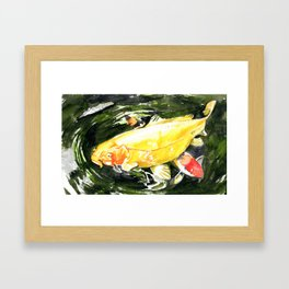 Koi carp  Framed Art Print